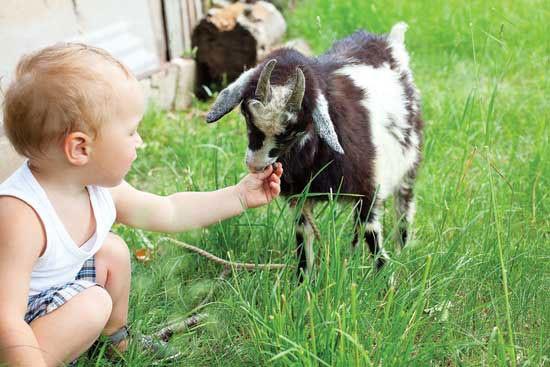 Baby_farm
